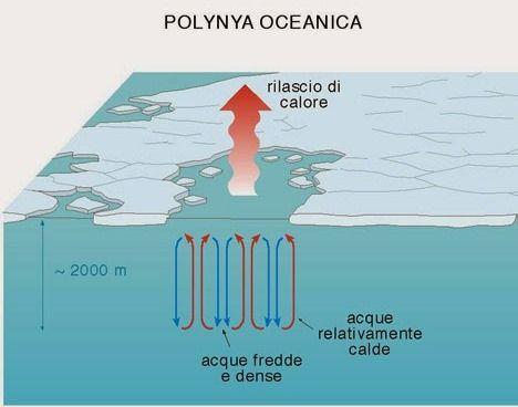 polynya (1)