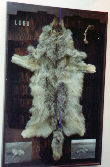 LOBO_Seton_Museum-359x545
