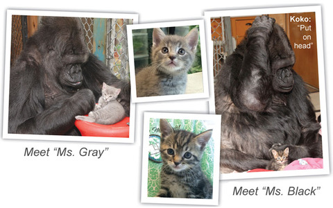 meet_ms_gray_and_ms_black