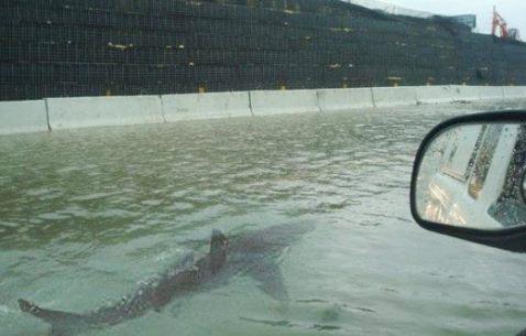 shark_sighting