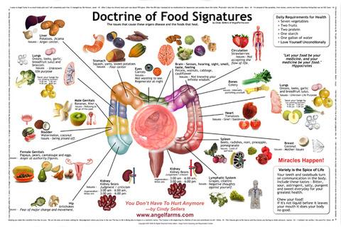 Doctrine-of-Food-Signatures_11x17OPT