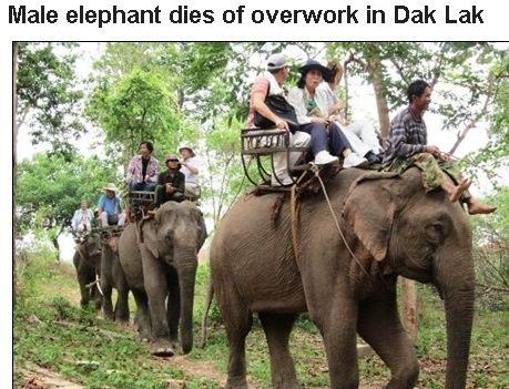 elephantride5