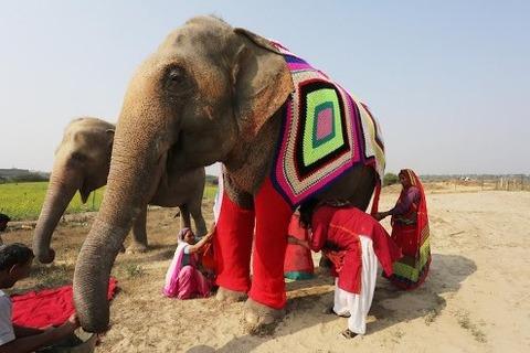 wildlife-sos-elepant-sweaters-4