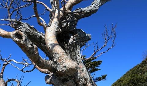 樹木から学ぶ : ひかたま(光の魂たち)
