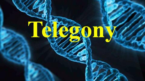 Sperm-DNA-Fragmentation-Index-1