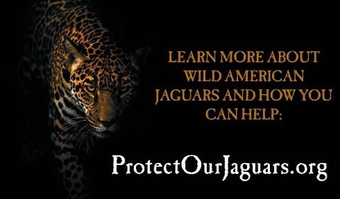JaguarInfographic7