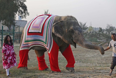 wildlife-sos-elepant-sweaters-1