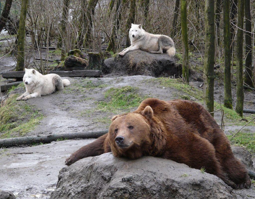 クマの画像 p1_40