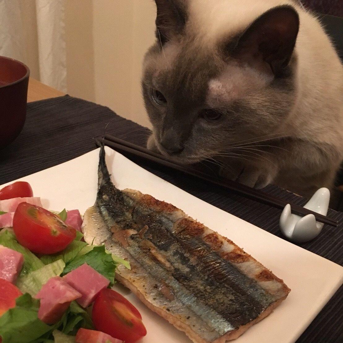 ネコ・イケガミ最新ブログです!(十三夜のお月見編)