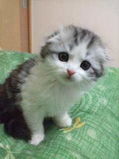 猫猫猫猫猫猫猫猫