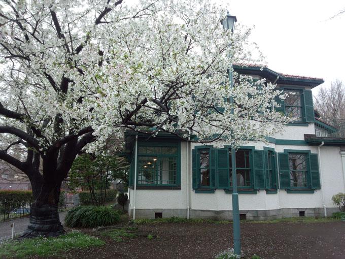 山手イタリア館と桜雨DSC_0170