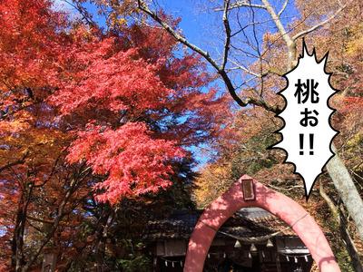 20171202犬山紅葉散策_171204_0217