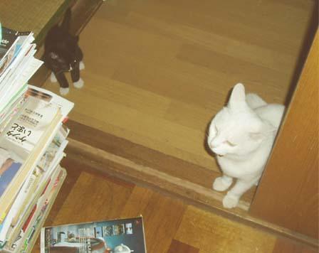 タビィ2004/8/11-2
