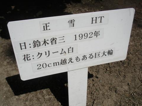 P5110157