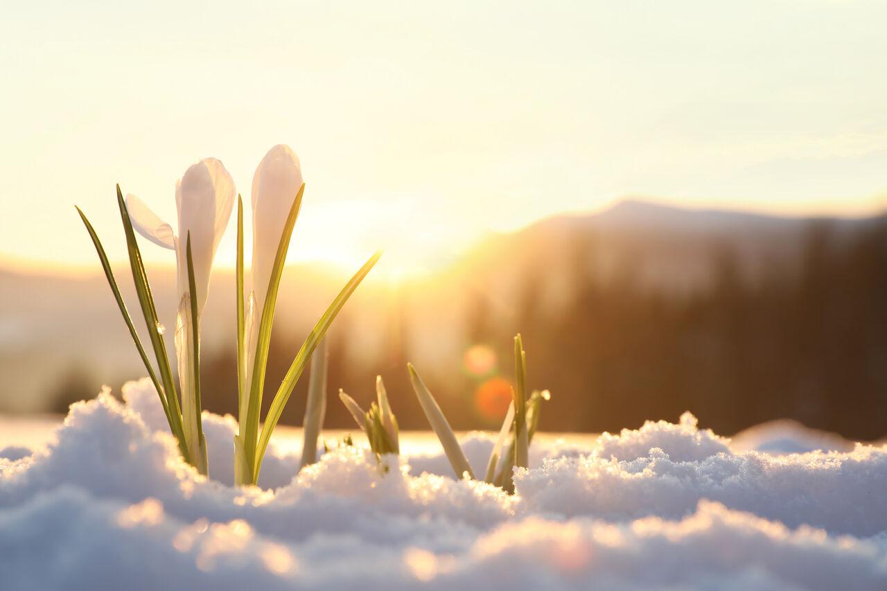 2020年3月29日(日曜日)雪注意!!