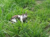 グランボレに住みついたネコ