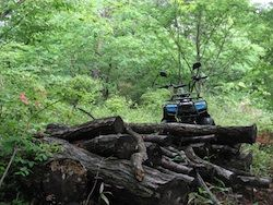 forest-buggy