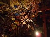 竈門神社のライトアップ2