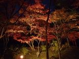 竈門神社のライトアップ4