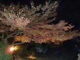 竈門神社のライトアップ5