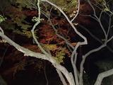 竈門神社のライトアップ3
