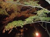 竈門神社のライトアップ1