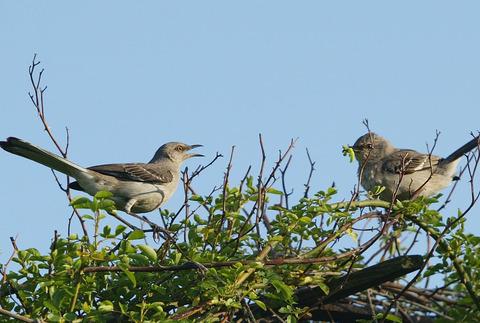 arguing_birds