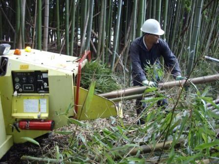 伐採写真3