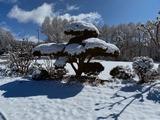 雪の下 ほうれん草2