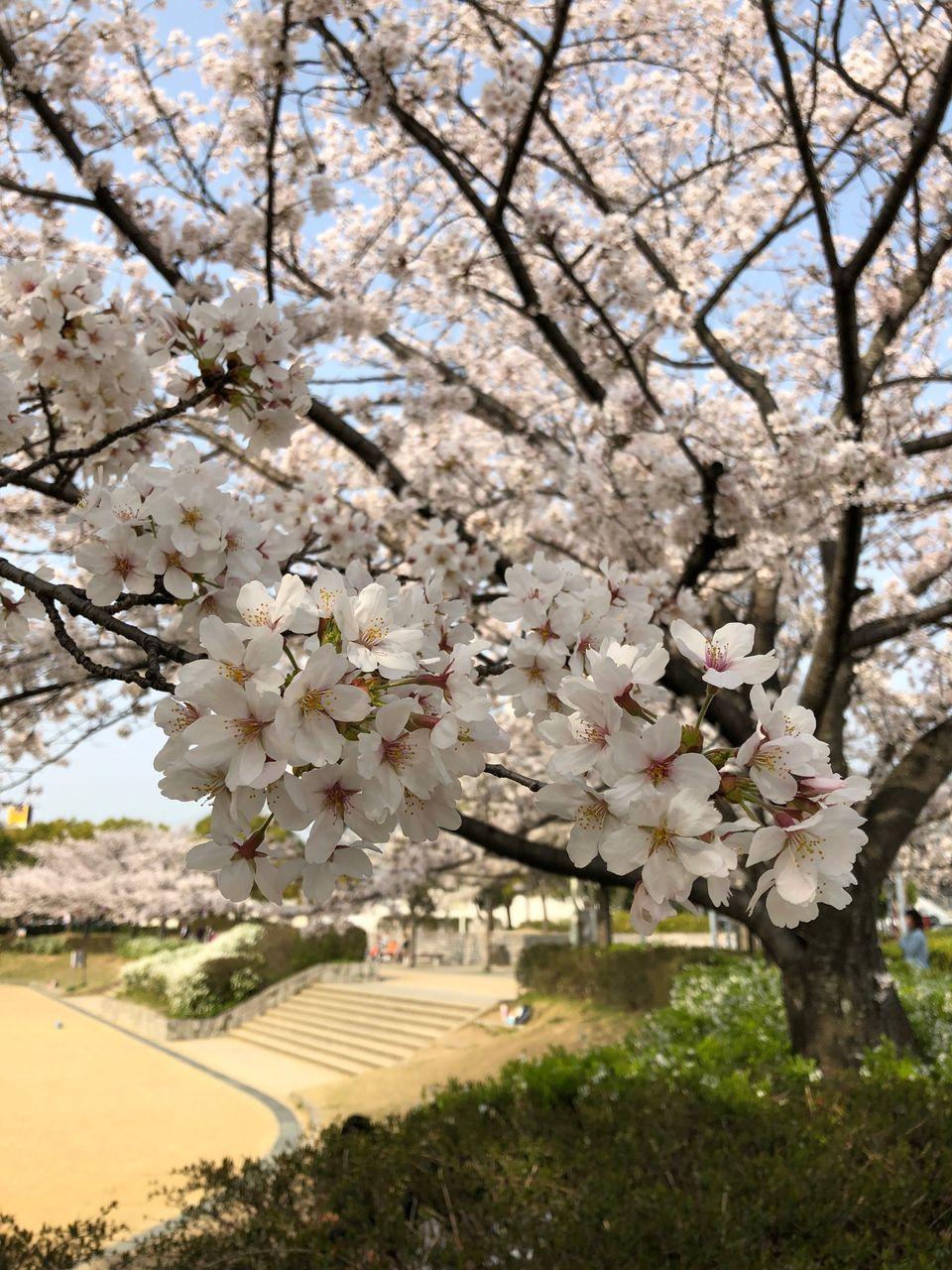 桜2018-2