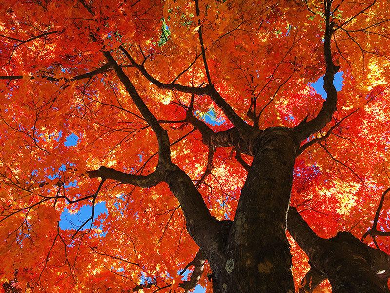 高原の町は紅葉いっぱい♪