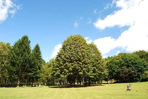 八ヶ岳自然文化園 で、芝生を走...