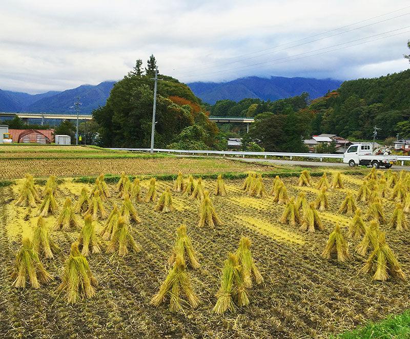 今年も無事に稲刈りが終わりました