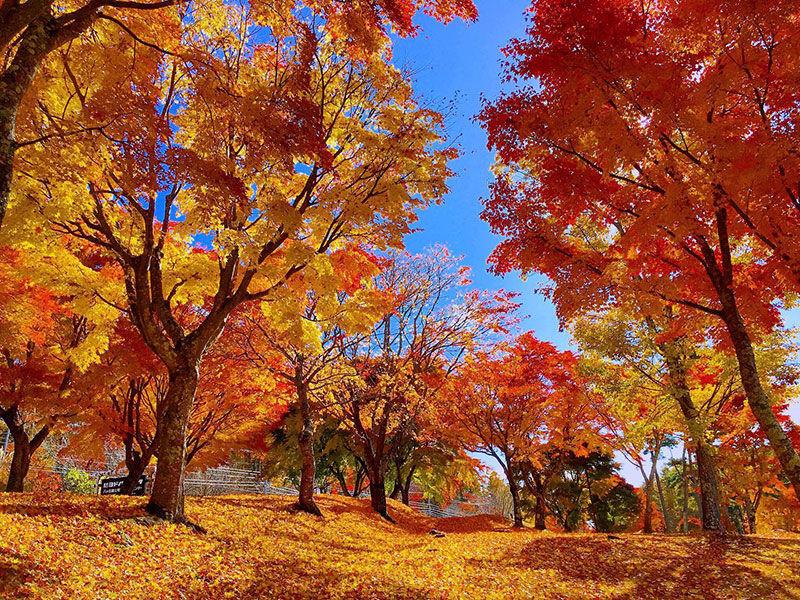 高原の町は紅葉いっぱい♪(3)