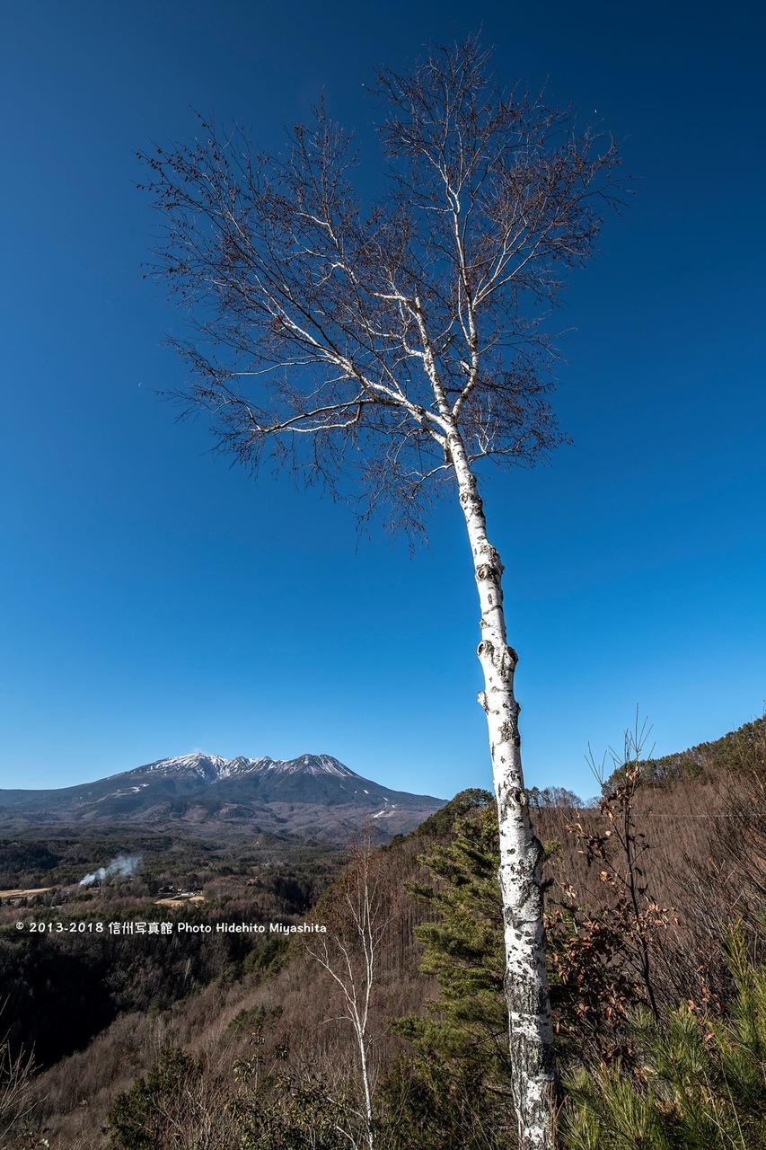 白樺と御嶽山