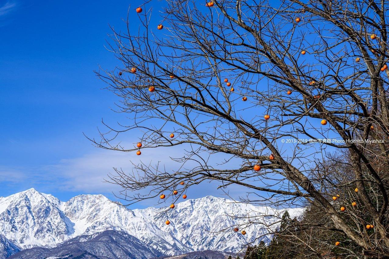残り柿と白馬三山
