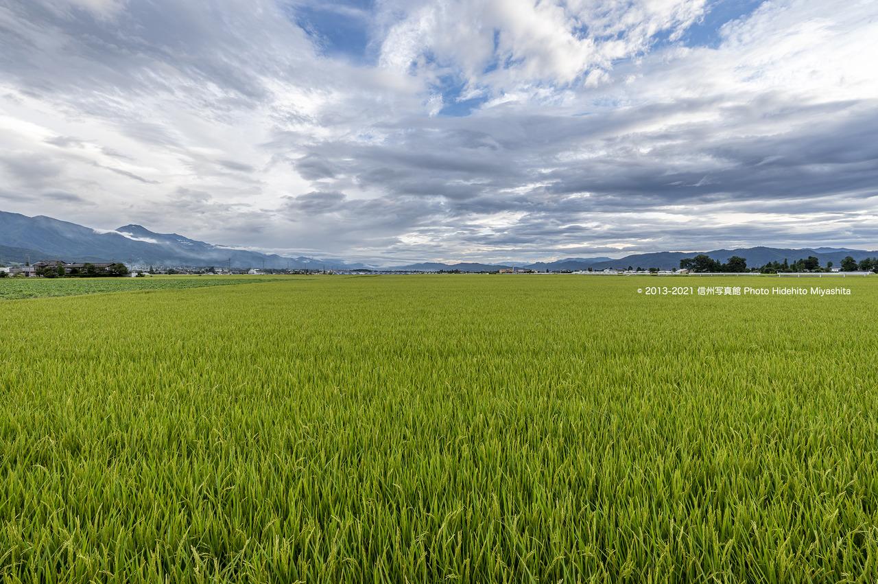 安曇野の田園風景20210821-_DSC6224