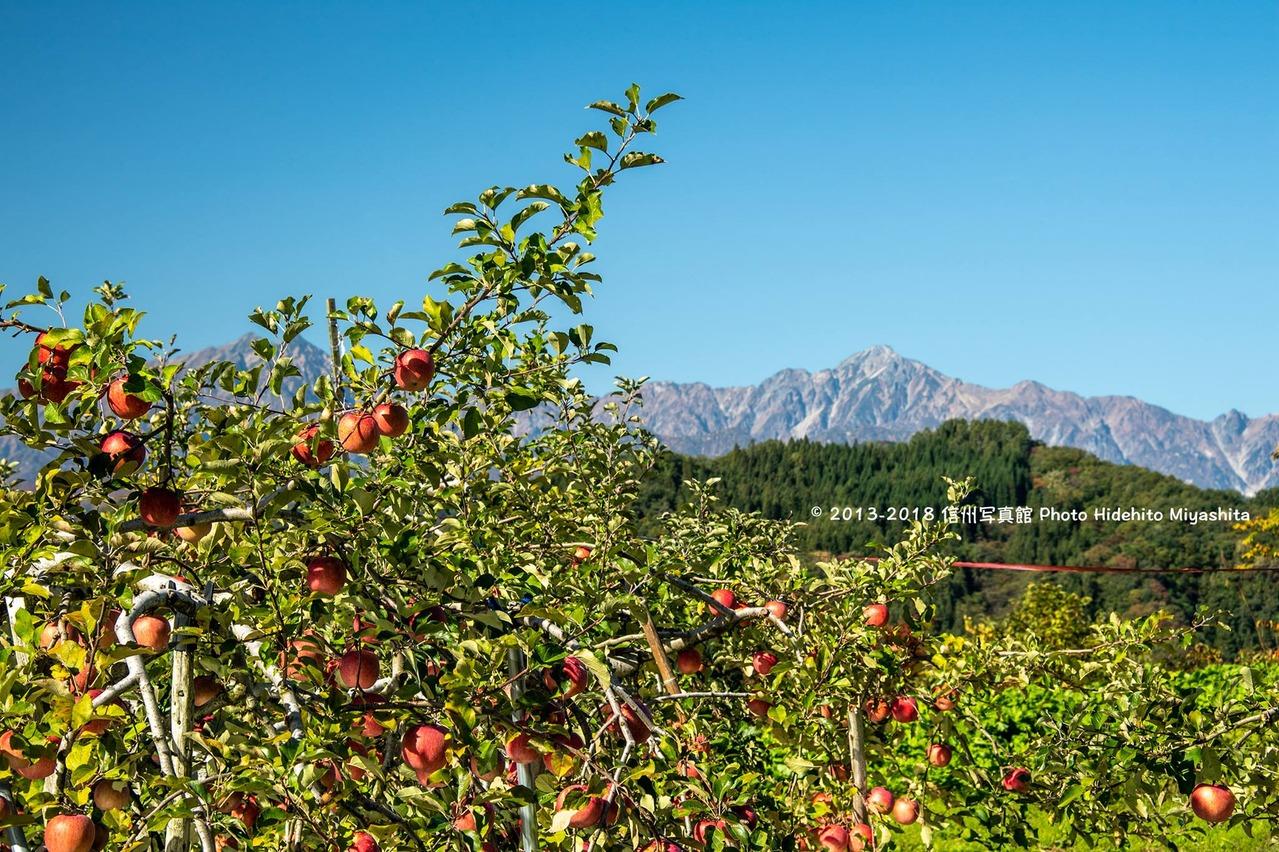 秋の実りと五竜岳
