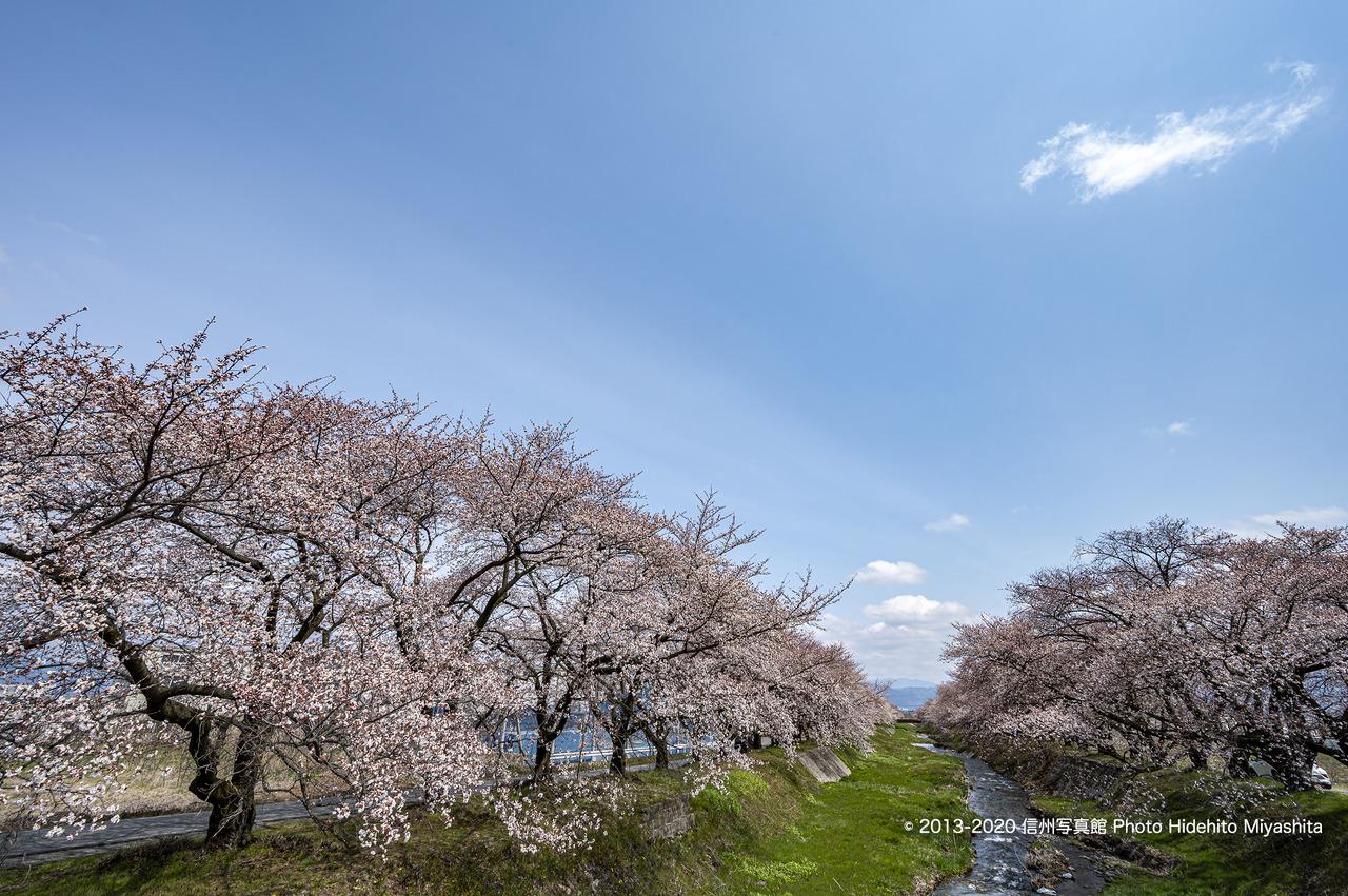 黒沢川の春_20200412-DSC_9628