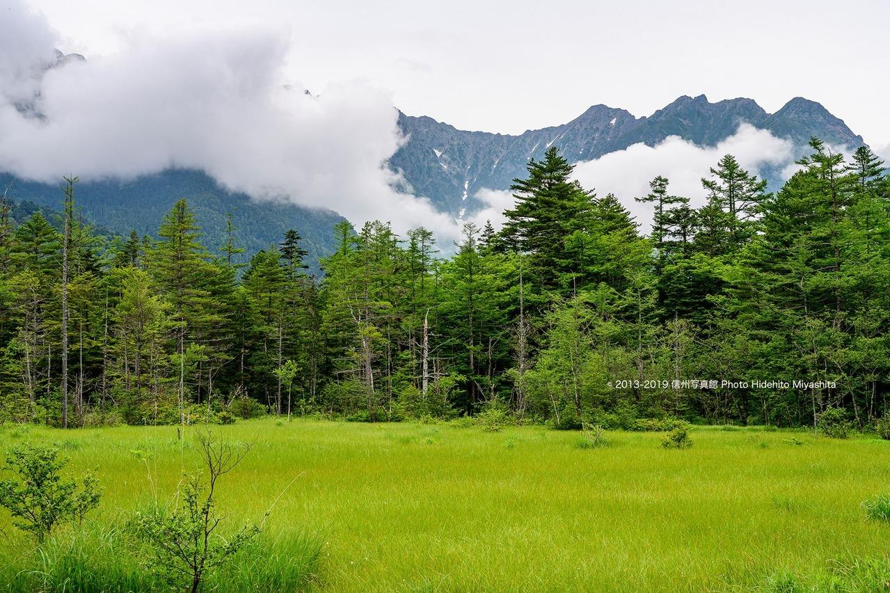緑の田代湿原