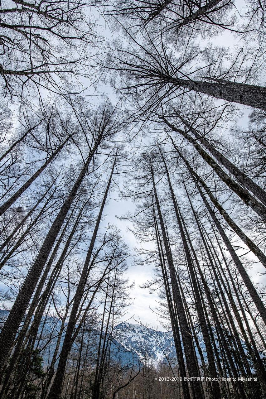 樹々の間に