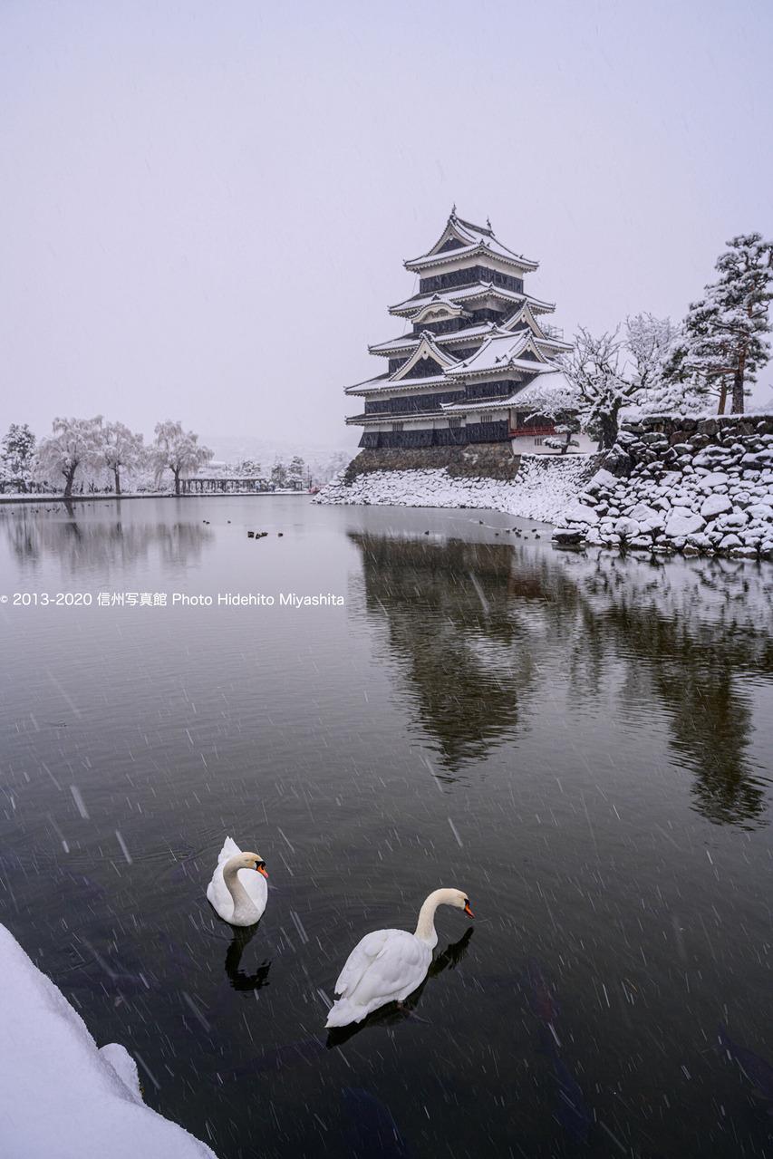 雪降る松本城にて_20200128-_DSC7697