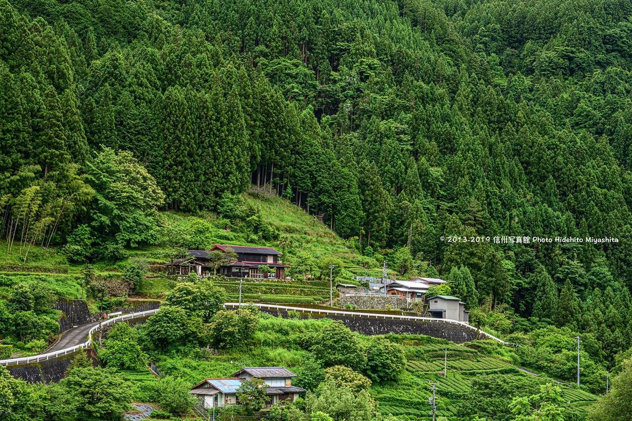 緑色の農村風景