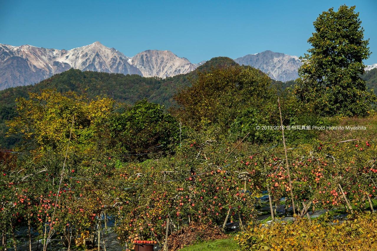 りんごと白馬三山