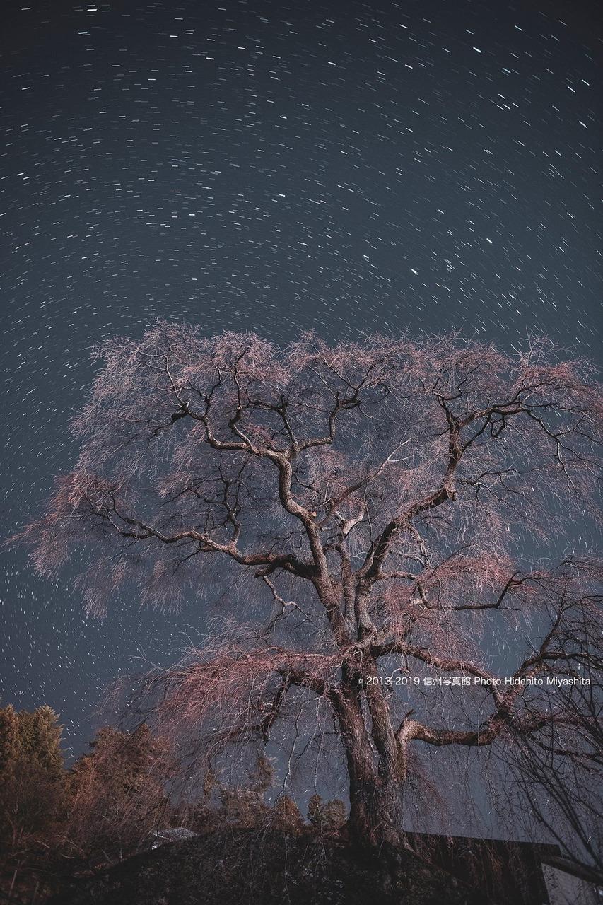 石塚桜2019