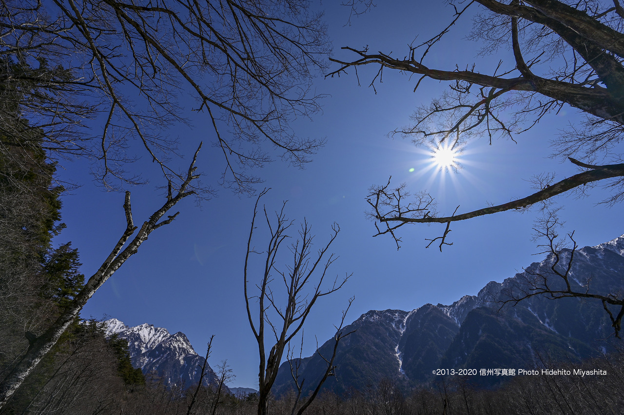 春の陽射し_20200411-DSC_9395