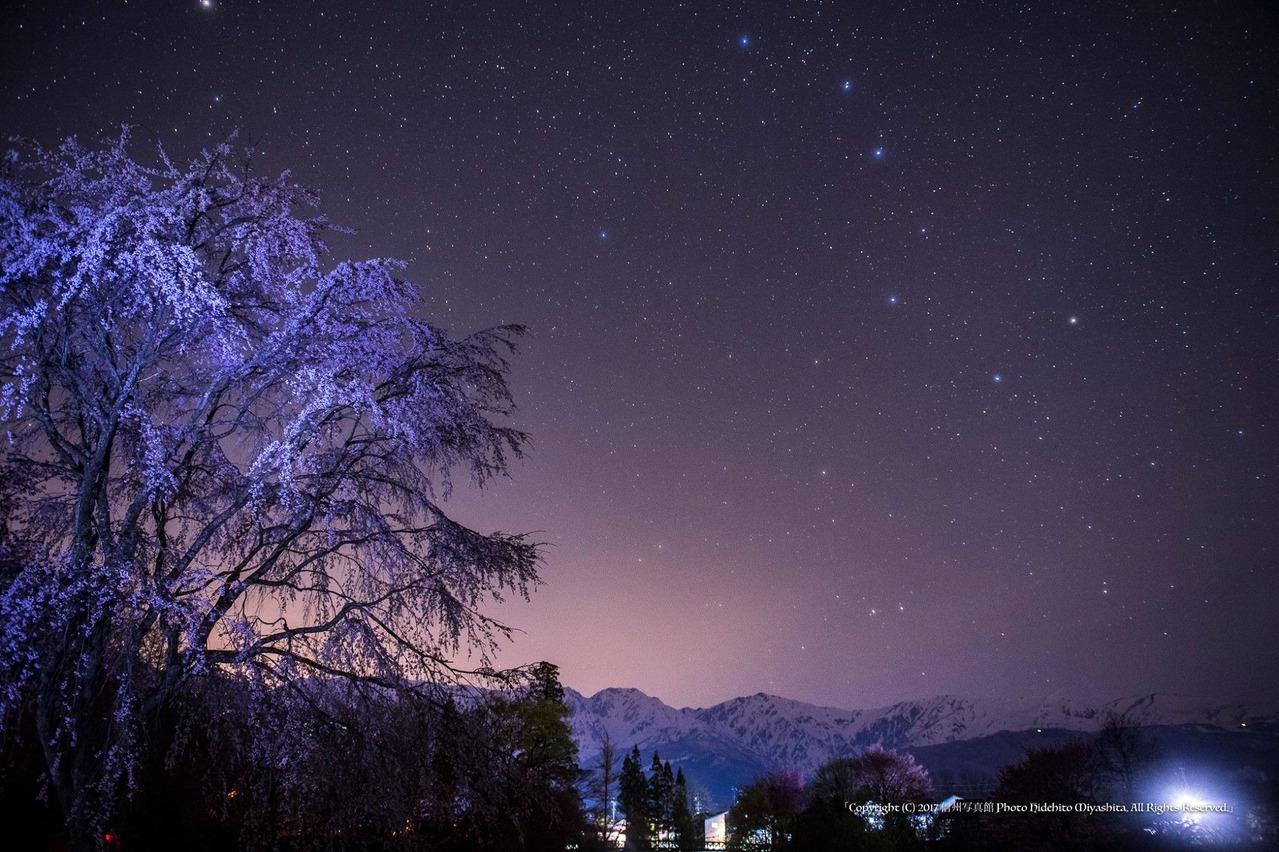 桜と北斗七星