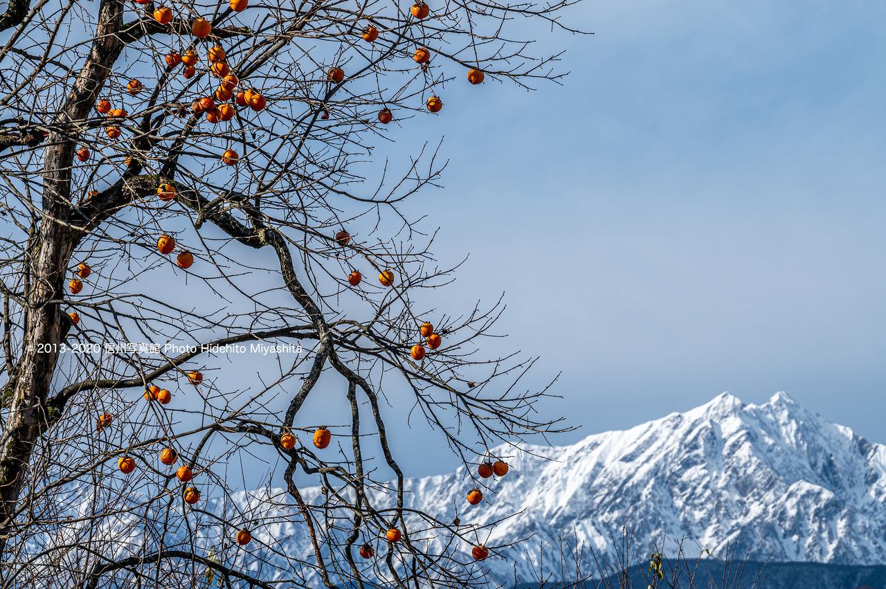 残り柿と白い鹿島槍ヶ岳_20201206-DSC_6298