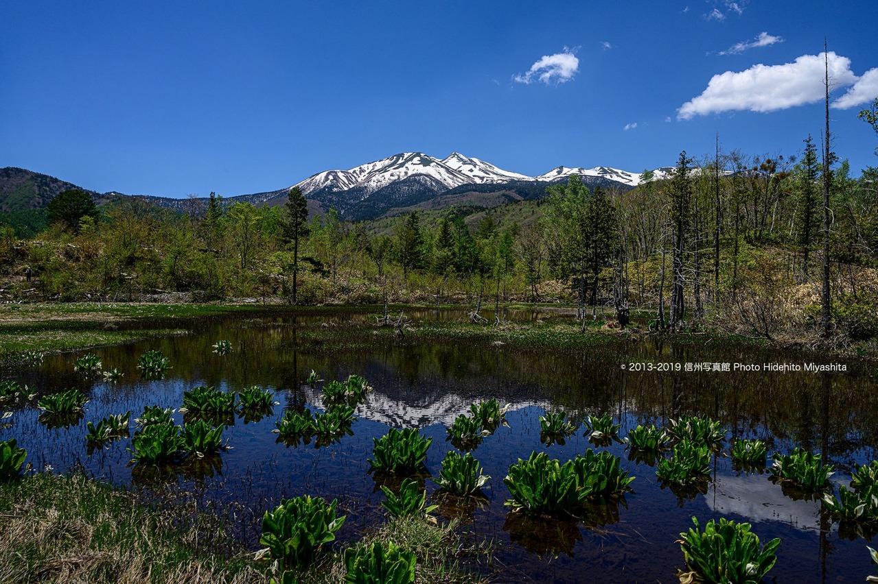 初夏のどじょう池…