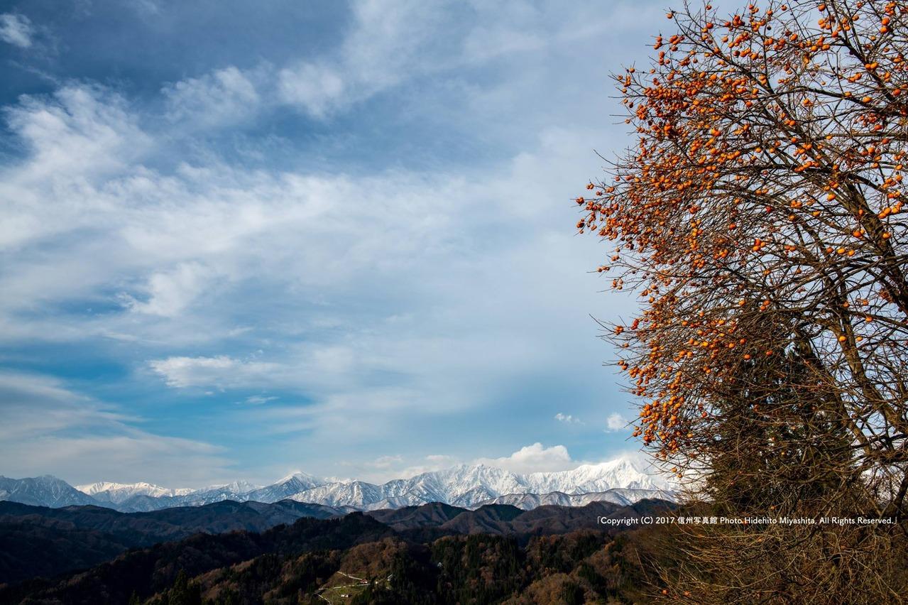 柿と後立山連峰